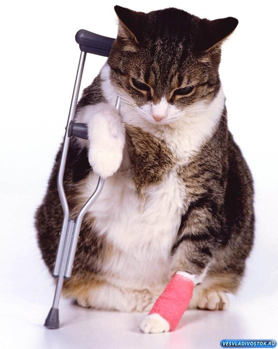 Что делать если ваша кошка поранилась