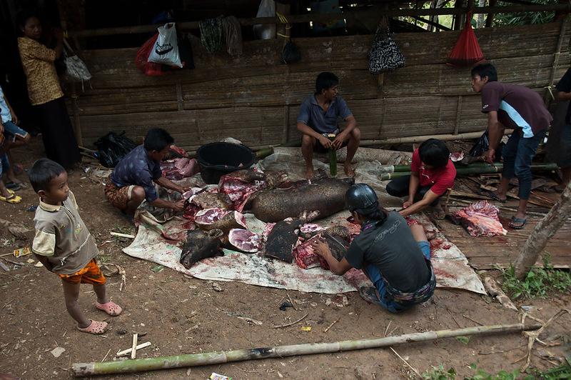 Закалывание буйволов на церемонию похорон