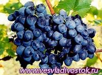 Виноградарско-винодельческий туризм