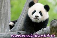 Лучший зоопарк Европы 2010 был признан венский зоопарк