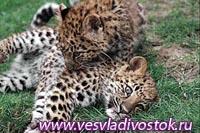 В Приморском крае создан национальный парк «Земля леопарда»