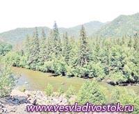 Таможенники Тындинского поста задержали крупную контрабанду леса