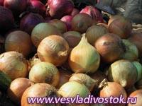 Стерилизованные луковицы