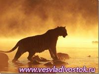Встреча напарника с тигром и рассуждения о хозяине Уссурийской тайги