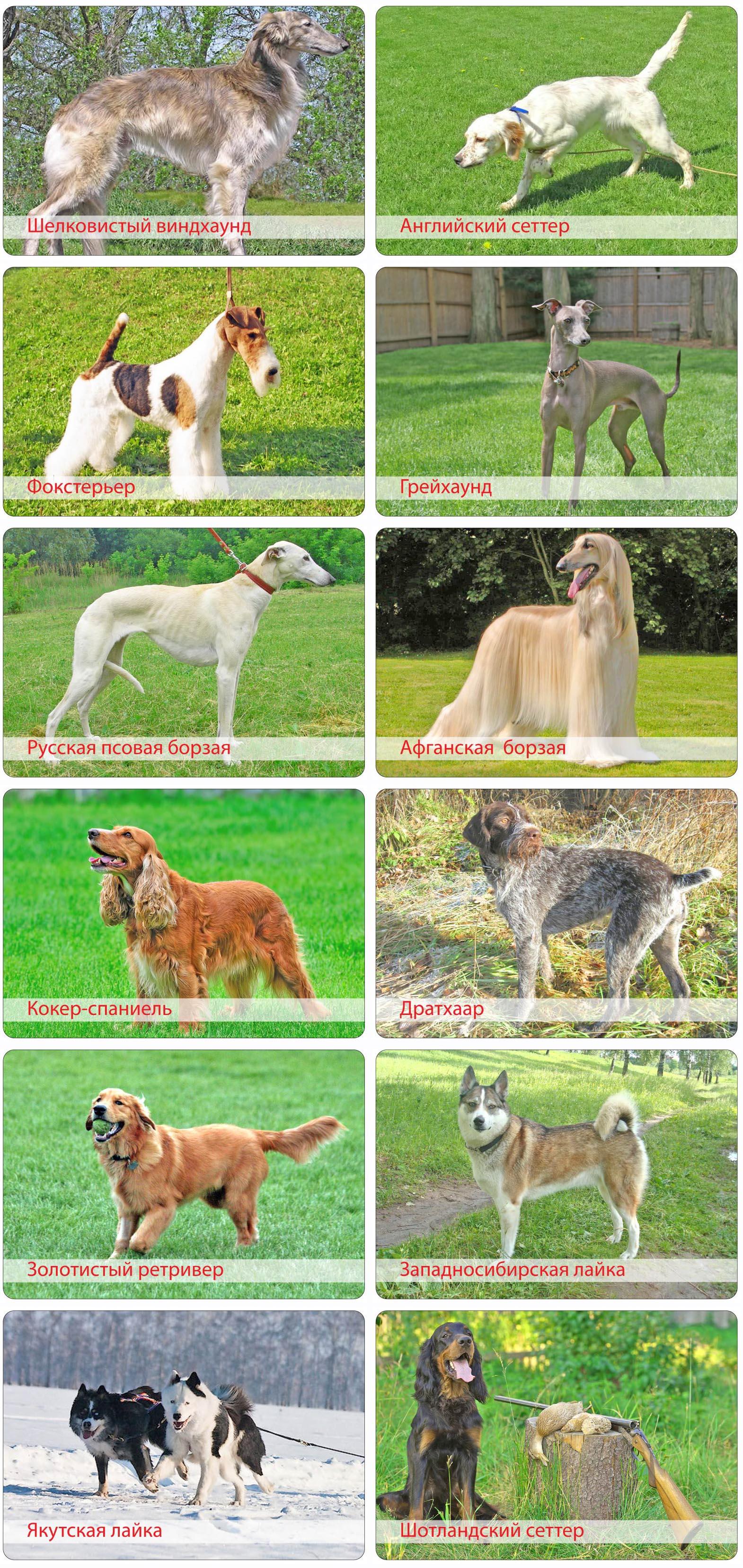Охотничьи породы собак 1994 год