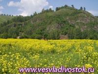 Природный парк на Алтае