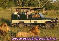 В Крыму откроется сафари-парк львов