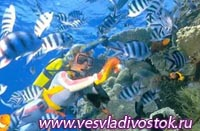 Подводные танцы на Большом Барьерном рифе
