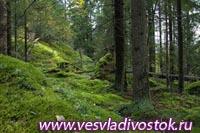 В Финляндии открылся новый национальный природный парк Sipoonkorven
