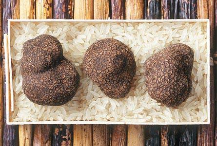 Как приготовить гриб трюфель в домашних условиях