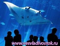 Самый большой в мире аквариум открылся в Турции