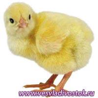 «БИОСТИМ» в животноводстве