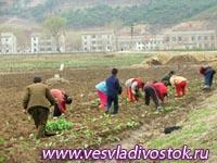 Овощеводы думают о сохранности будущего урожая
