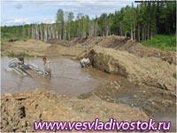 Нашествие жуков-короедов губит кедр в Хакасии