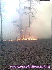 Лесники Хакасии потушили в выходные 4 пожара