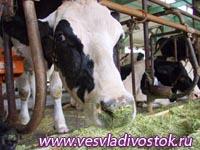 Правительство поможет животноводам Хакасии реконструировать хозяйства