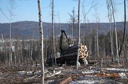 Как используются древесные ресурсы